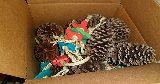 bunnies digging box pine cones