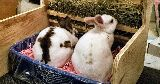 bunnies litter tray hay feeder
