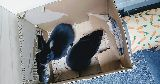 bunnies playing chewing box tunnel hideaway