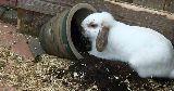 bunny digging plant pot