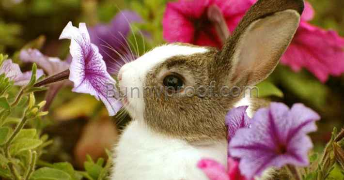 bunny eating flowers