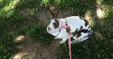 bunny harness outdoors