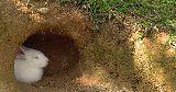 bunny hiding burrow