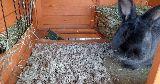 bunny hutch litter