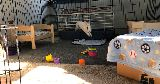 bunny jumping out pen