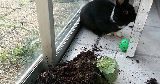 bunny knocked over plant pot