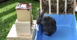 bunny litter tray hay water