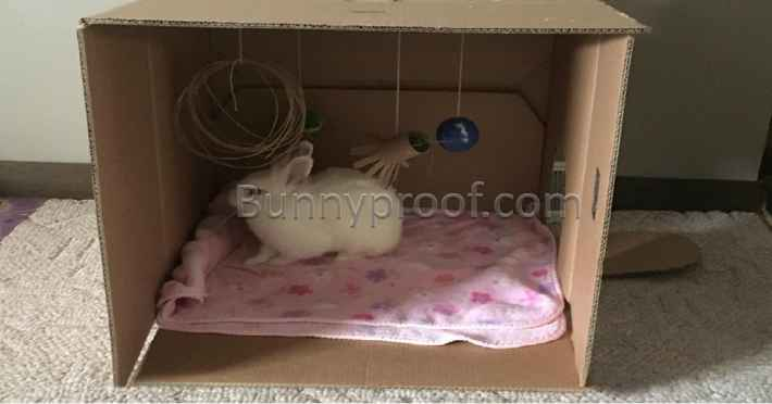 bunny playing cardboard box hideaway
