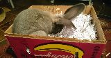 bunny playing digging box