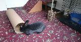 bunny proofed room tube ramp