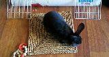 bunny sitting grassy mat