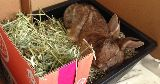 bunny sleeping litter tray hay feeder