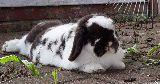 bunny yard