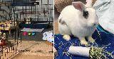 edisons bunny enclosure