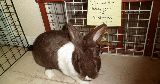 naughty bunny chew gate