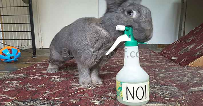 naughty bunny water mister
