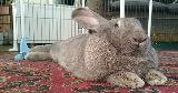 ozric bunny
