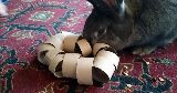 rabbit playing toy toilet roll rattle