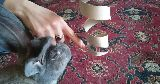 rabbit playing toy toilet roll spiral
