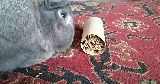 rabbit playing toy toilet roll treat hider
