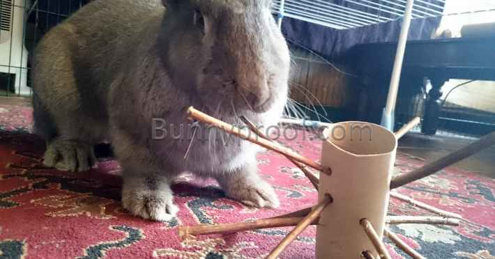 rabbit playing toy toilet roll twig tree