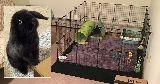 winters pet pen bunny enclosure