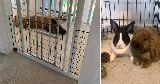 wire mesh bunny gate dog